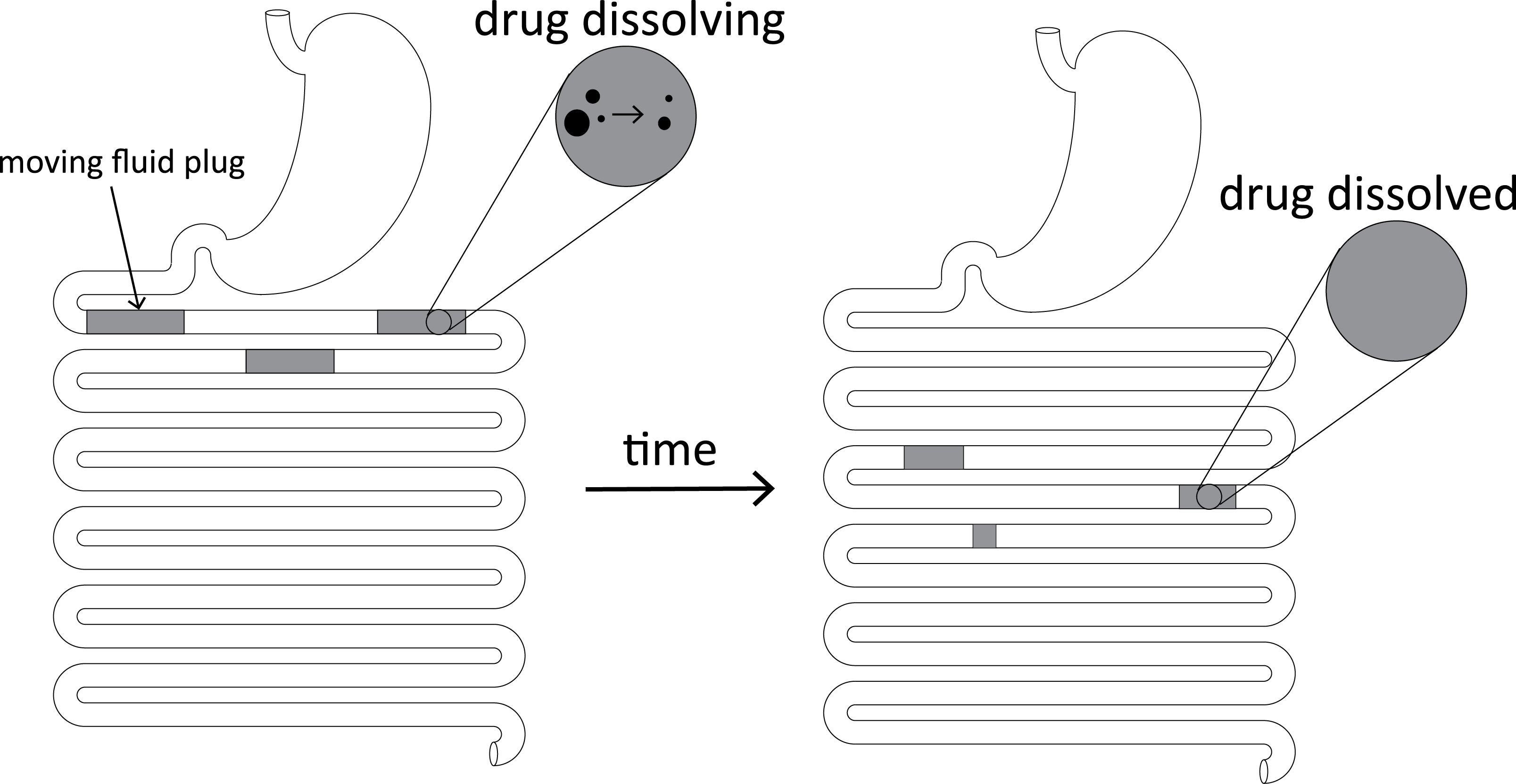 Mechanistic modeling of gastrointestinal motility with integrated dissolution for simulating drug absorption