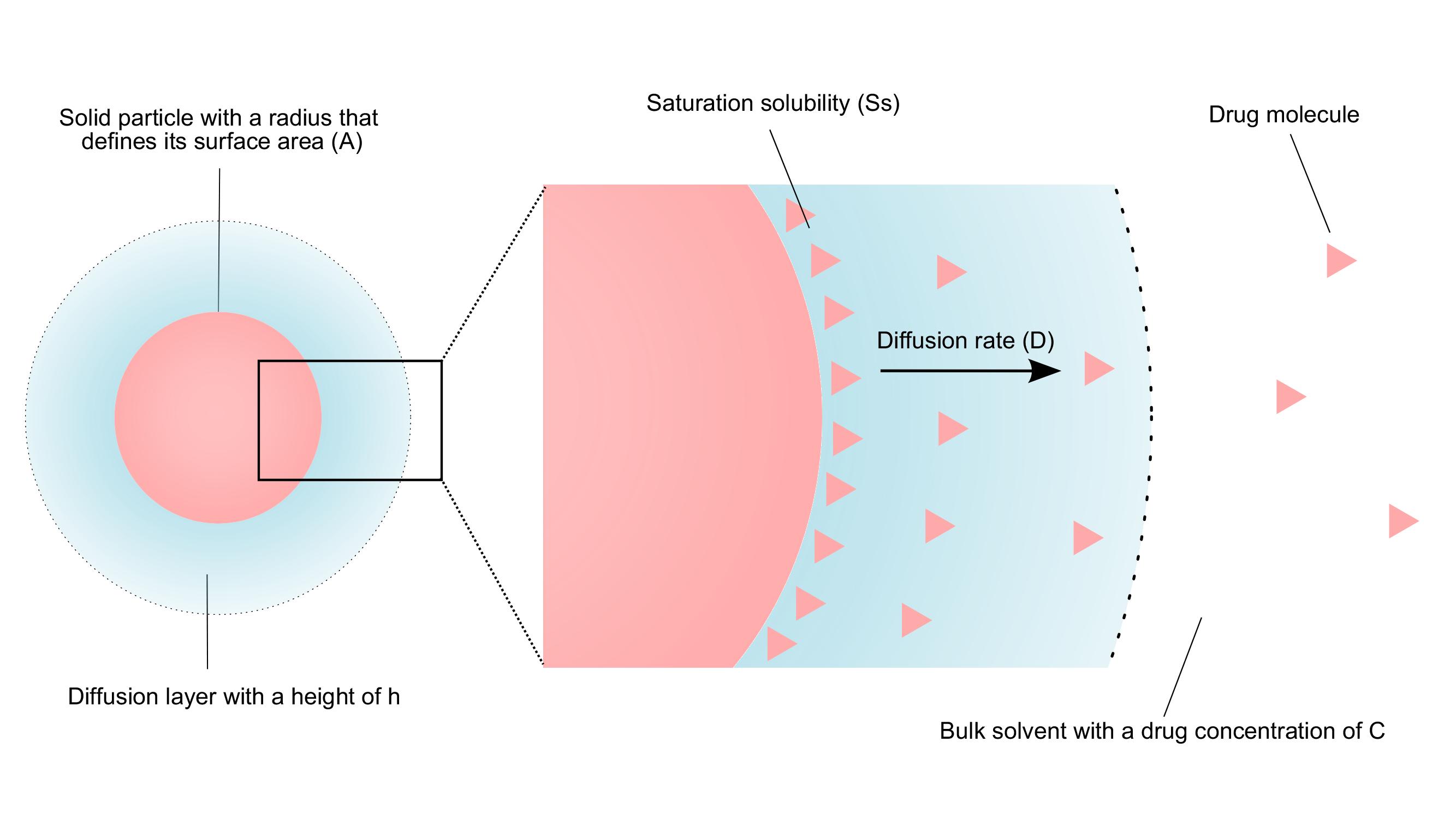Intestinal absorption of BCS class II drugs
