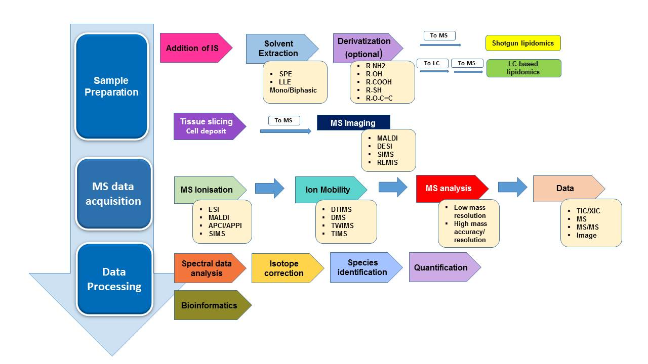 A concise review on lipidomics analysis in biological samples