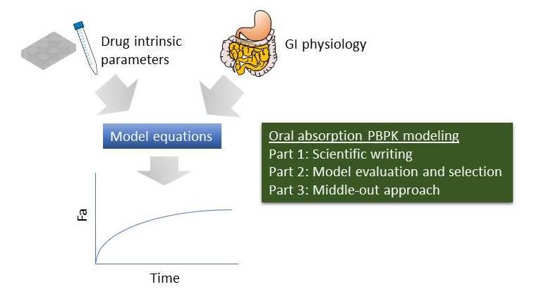physiologically-based pharmacokinetic modelling (PBPK)