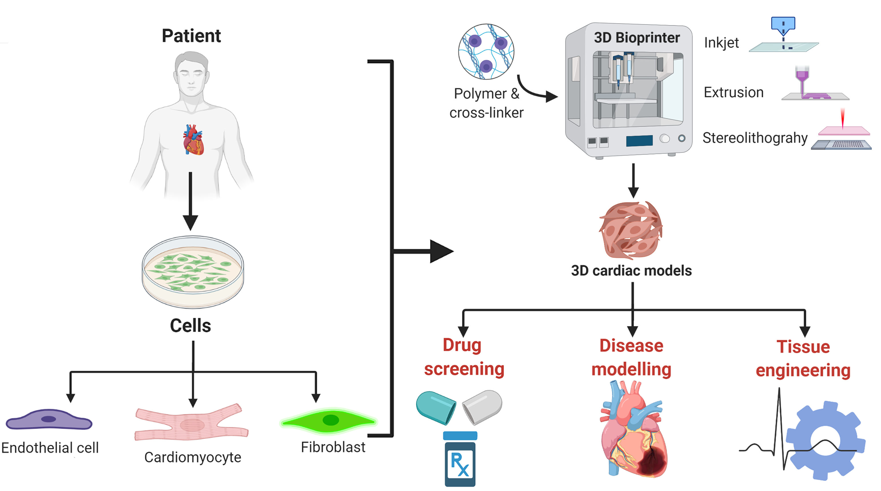 3D bioprinted models for cardio-vascular research and drug development